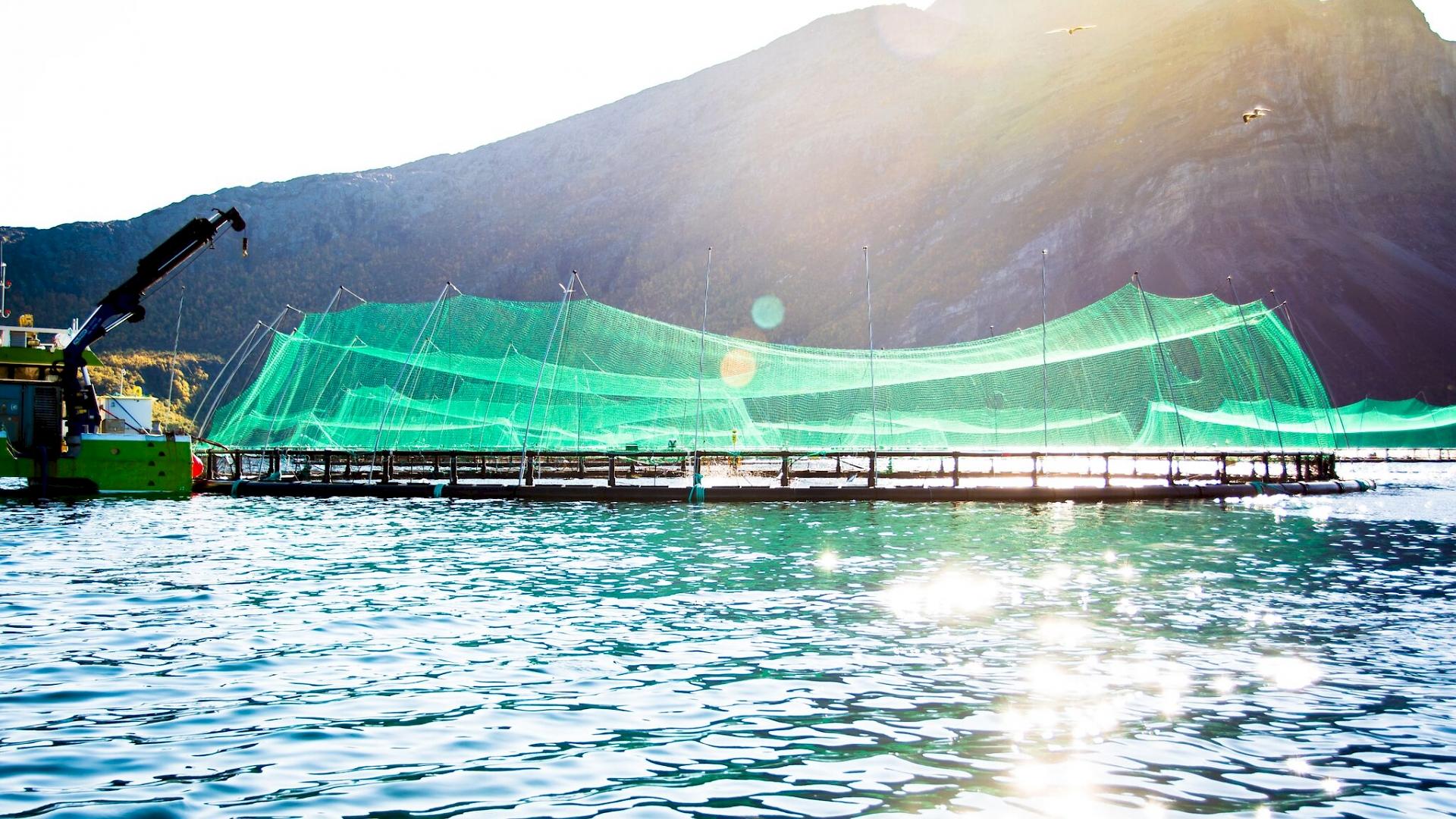 Aquakulturen in Norwegen