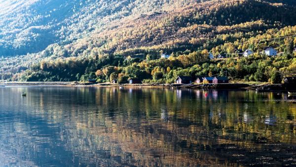 Lachs Aquakultur in Norwegen - unsere Experten beantworten 11 Fragen